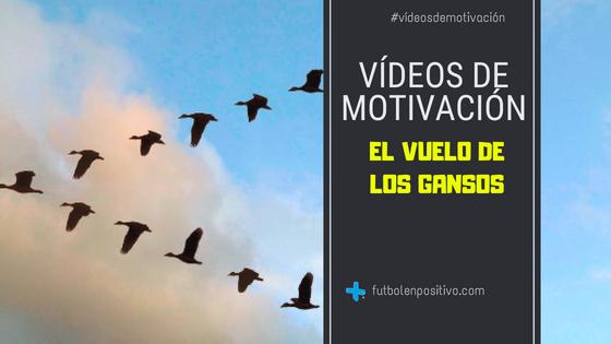 """Vídeo de motivación 5: """"El vuelo de los gansos"""""""