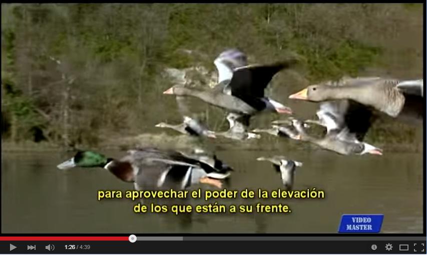 """Vídeos de motivación 5: """"El vuelo de los gansos"""""""